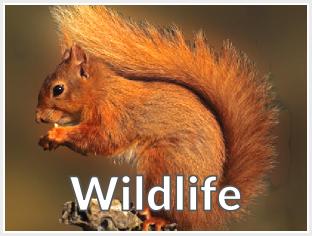 menu button image - squirrel