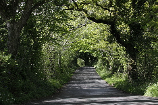 Our lane on the Anglesey Coast path
