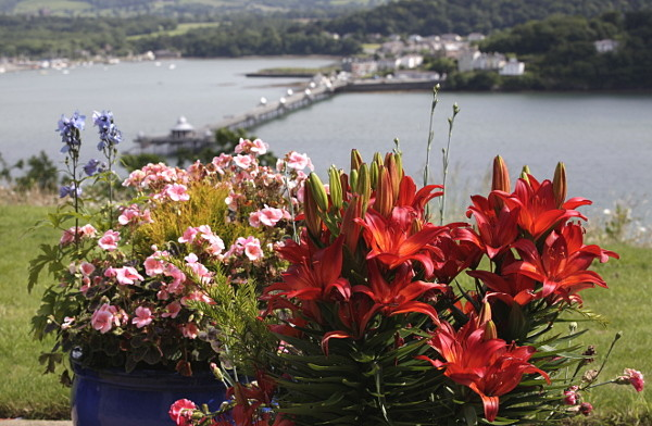 Lillies on the apartment terrace at Coed y Berclas. Bangor Pier in the background