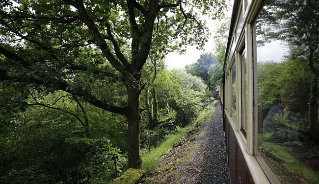 Welsh Higland train threading its way through wooded glades around Waunfawr